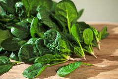 Fresh Spinach Stock Images