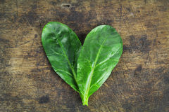 Fresh spinach, high protein Stock Images