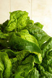 Fresh spinach in the kitchen Stock Image