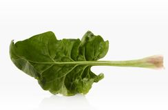 Fresh spinach leaf. Over white background Stock Images