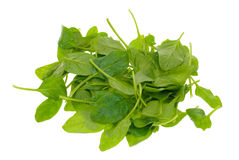Fresh spinach leaves Royalty Free Stock Image