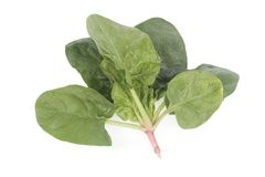 Fresh spinach leaves Royalty Free Stock Photography