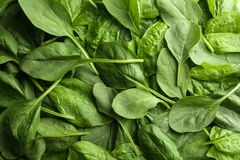 Fresh spinach leaves. As background Stock Photography