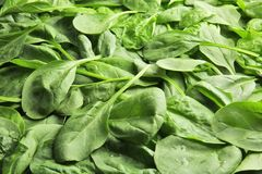 Fresh spinach leaves. As background Royalty Free Stock Images