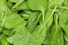 Fresh spinach leaves. background or texture Royalty Free Stock Photos
