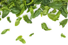 Fresh spinach leaves. Stock Photo