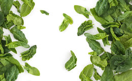 Fresh spinach leaves. Stock Images