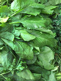 Fresh spinach leaves Stock Image