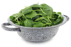 Fresh spinach leaves in an enamel colander Royalty Free Stock Photo