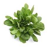 Fresh spinach leaves. On white background Stock Photos