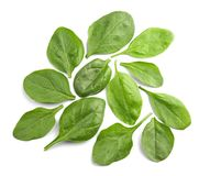 Fresh spinach leaves. On white background Stock Photography