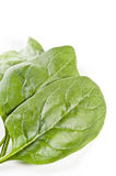 Fresh spinach leaves over white Stock Photos