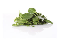 Fresh spinach leaves on the reflective surface Royalty Free Stock Photography