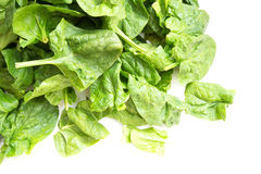 Fresh spinach leaves Royalty Free Stock Photos