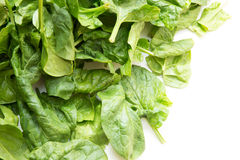 Fresh spinach leaves. On a white background Royalty Free Stock Images