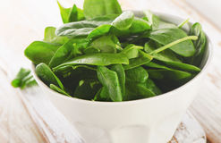 Fresh spinach leaves in white bowl Royalty Free Stock Photo
