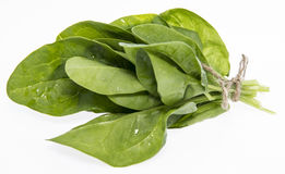 Fresh Spinach Leaves on white Royalty Free Stock Photography
