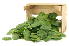 Fresh spinach leaves in a wooden box Royalty Free Stock Photography