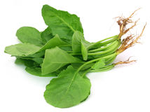 Fresh Spinach Royalty Free Stock Photos