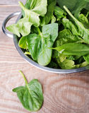 Fresh spinach and sorrel. Leaves in a collander stock photography