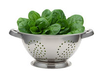 Fresh Spinach in a Stainless Steel Colander Royalty Free Stock Image