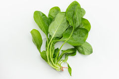 Fresh Spinach Stock Photography