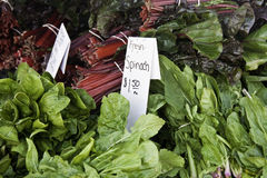 Fresh spinach & swiss chard. Fresh spinach and red swish chard with white signs for prices and description Royalty Free Stock Photography