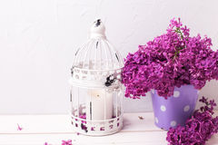 Fresh splendid lilac flowers in  bucket  and lantern  with candl Royalty Free Stock Image