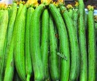 Fresh sponge cucumbers Stock Image
