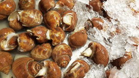 Fresh Spotted babylon snails and escargots on farmer market read Royalty Free Stock Photo