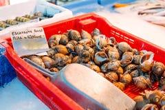 Fresh Spotted babylon snails and escargots on farmer market Royalty Free Stock Photo