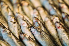 Fresh Sprat Fish On Display On Ice On Market Store Shop. Seafood Stock Image