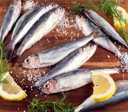 Fresh sprat fish Stock Image