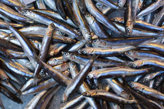 Fresh sprat on a fish market Stock Image
