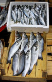 Fresh sprats on a market stall Royalty Free Stock Photos
