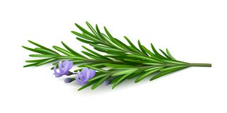 Free Fresh Sprig Of Rosemary With Flowers On A White Background. Royalty Free Stock Photography - 178140887