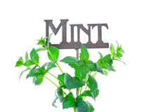 Mint with Garden Marker Royalty Free Stock Image