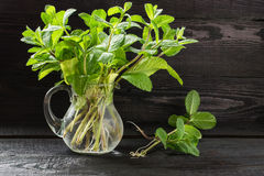 Fresh sprigs of mint in a jug stock photos