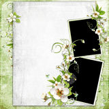 Fresh Spring Apple Tree  Flowers Frame Royalty Free Stock Photography