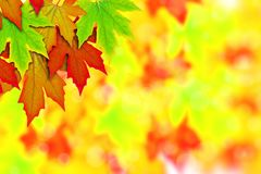 Fresh Spring Autumn Leaves border Stock Images