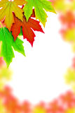 Fresh Spring Autumn Leaves border Royalty Free Stock Photos