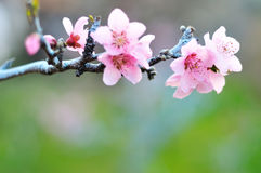 Fresh spring background Royalty Free Stock Photos
