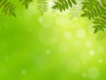 Fresh spring background Stock Photo