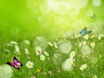 Fresh spring background Royalty Free Stock Photo