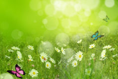 Fresh spring background Stock Images