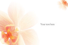 Fresh spring background. This is a refreshing spring background with an orchid flower Royalty Free Stock Photography