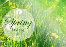 Fresh spring background. Concept greeting card with the inscription spring here. Soft focus photo of uncut green grass and sun li royalty free stock images