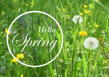 Fresh spring background. Concept greeting card with the inscription spring here. Soft focus photo of uncut green grass and sun li royalty free stock photography