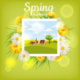 Fresh spring background with grass, dandelions and daisies Stock Photos