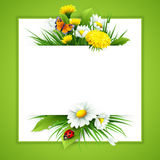 Fresh spring background with grass, dandelions and daisies Stock Image